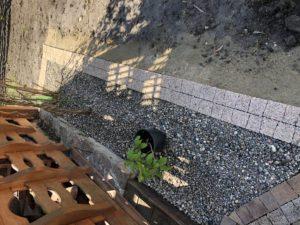 kamień ogrodowy biała podlaska